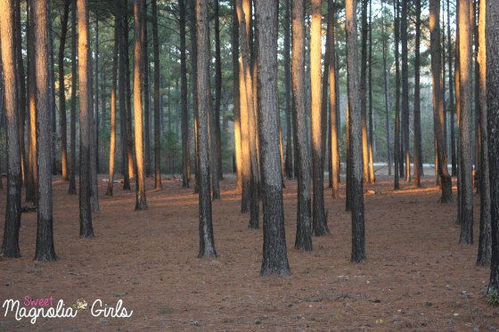 Sun in the Pines