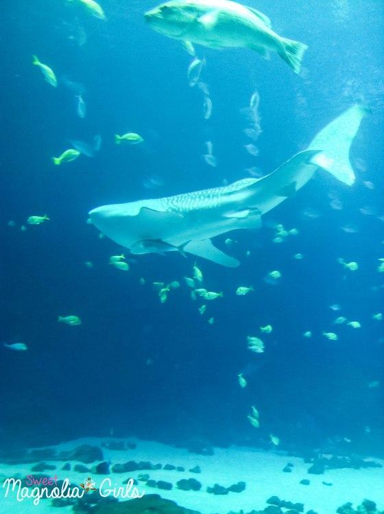 Whale..Shark!